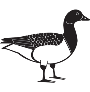 Duck - icon