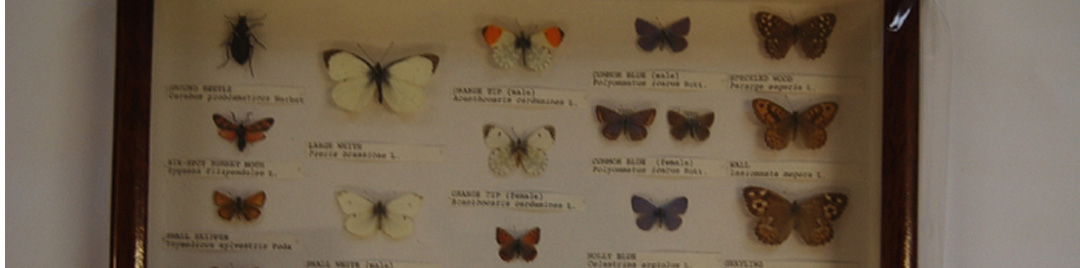 Display box of butterflies