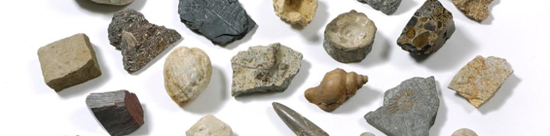 Assorted rock and fossil samples