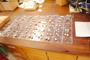 Bird Egg Collection