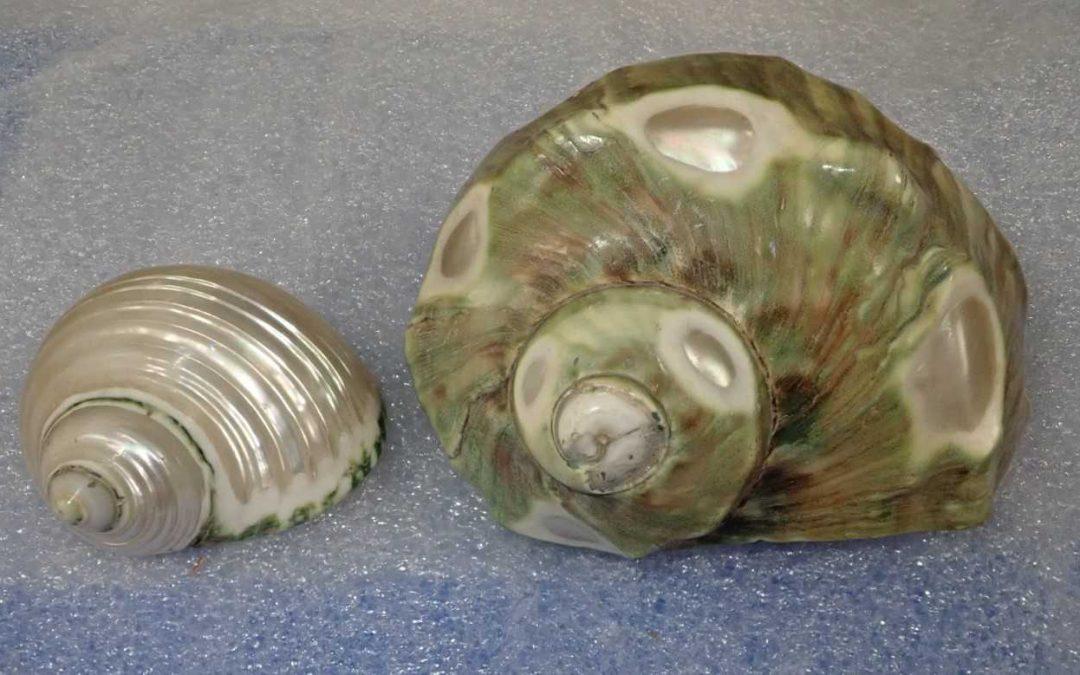 Mollusc-land