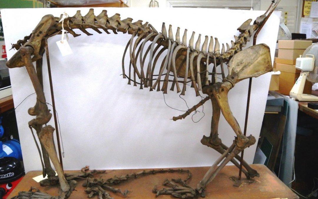 Conserving Bones