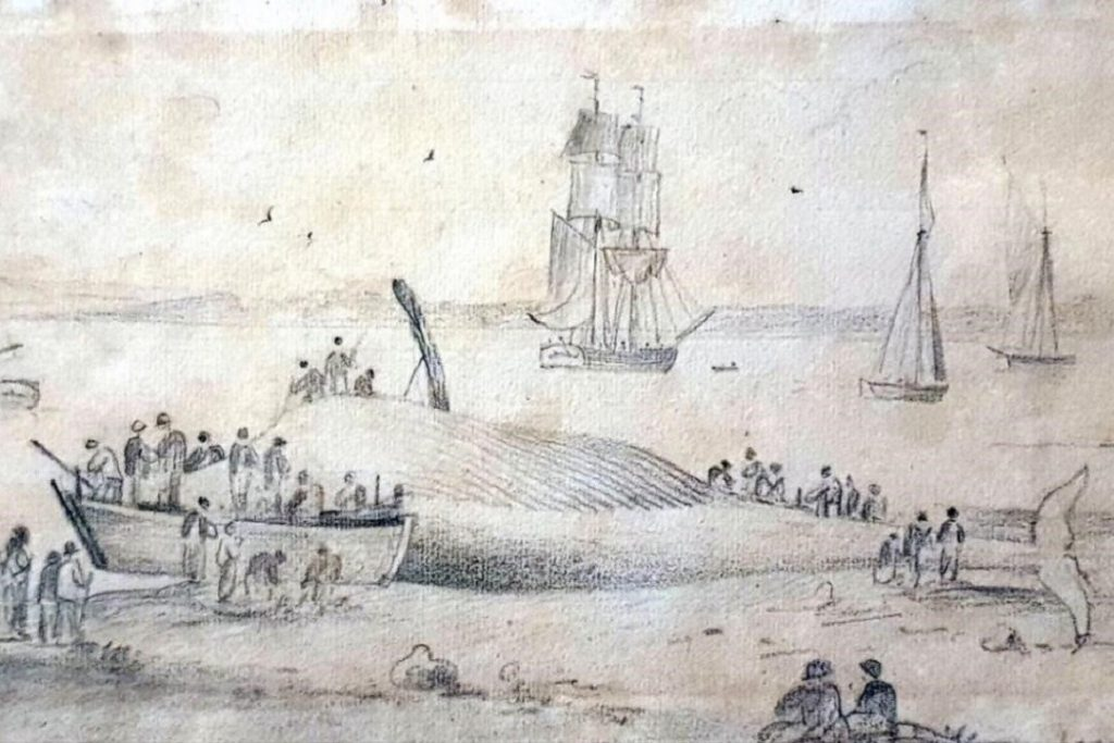 The Whale at Downham Reach, River Orwell by George Frost 1745-1821 in pencil was gifted to Ipswich Museum in 1973.