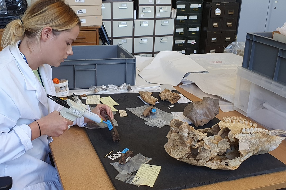 A white woman wearing a white lab coat is sat at a table with assorted fossil teeth. She is holding a a silicone putty gun and squeezing a blue paste onto sections of fossil